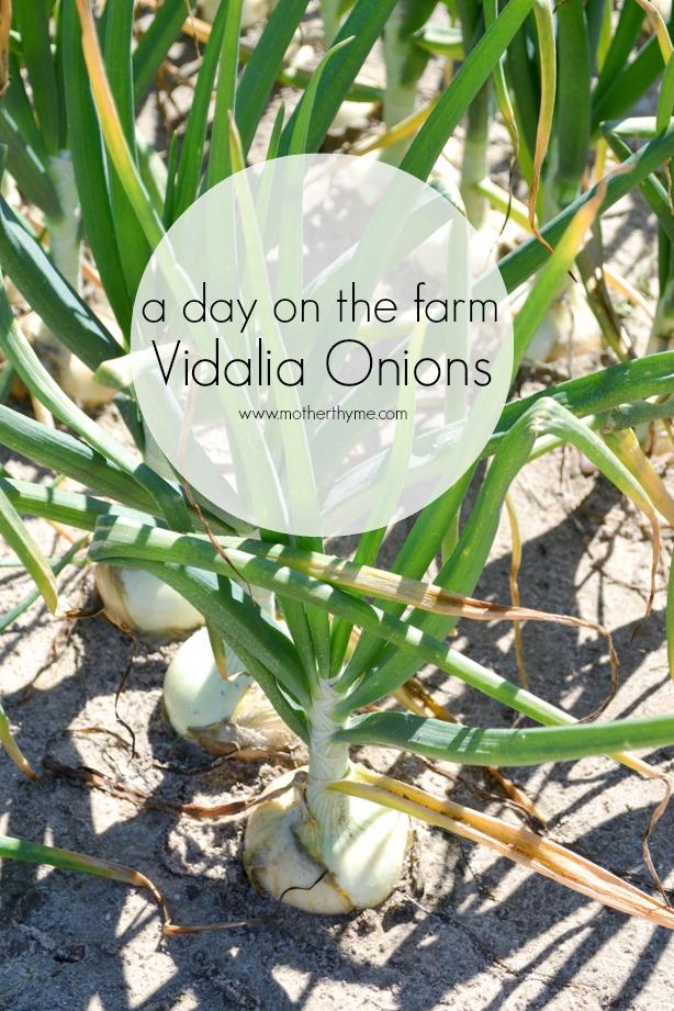 Vidalia Onion Farm Tour (#VisforVidalia) + $500.00 Visa Gift Card Giveaway!